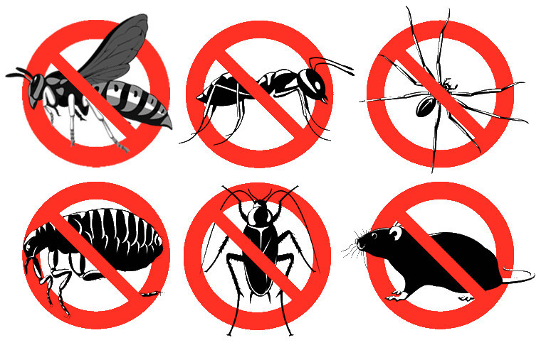 Pest Control Yuba City - Yuba City News